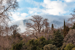 Still Winter But It Feels Like Spring (mikhailkorzhalov) Tags: canon sigma sigma1750 f56 50mm crimea yalta alupka landscape trees branches green blue mountains fog nature naturallight day outdoors white