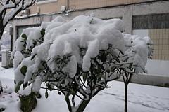 nieva en el barrio (David Herranz) Tags: nieve getxo lasarenas romo nevado euskadi