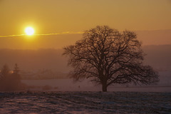 Old oak in wintertime (*SanM.*) Tags: nebulous neblig sonnenaufgang sunrise felder fields oak eiche quercus tree winter colours cold frozen kälte schnee snow colpachhaut ell redange visitguttland luxembourg europe