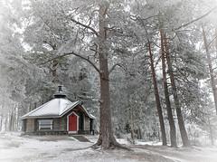 Joensuu - Finland (Sami Niemeläinen (instagram: santtujns)) Tags: joensuu suomi finland pohjoiskarjala north carelia talvi winter forest metsä kuhasalo luonto nature lumi snow ice jää frozen lake järvi pyhäselkä