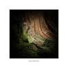 bark and lichen.... (bevscwelsh) Tags: bark lichen moss darknature fujifilmx100f