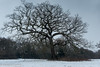 It's Snowing (M C Smith) Tags: snow snowing pentax k3 eppingforest hawkwood hill slope branches blue grey bushes