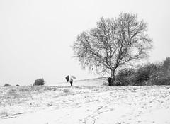 Nevada (Pep Vargas) Tags: neu nieve snow arbre arbol tree serreta cardedeu gent gente people bn bw omdem1