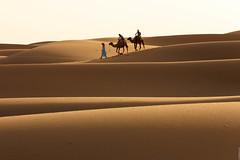 Early morning ride (Nicolas Bussieres (Lost Geckos)) Tags: desert sahara morocco dunes camel ride trek