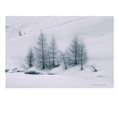 (Monica Muzzioli) Tags: winter snow mountains trees tracks stream bw blackandwhite monochrome landscape sundaylights