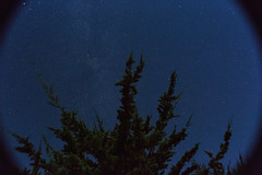 Calm Evening (Joe Ascioti) Tags: landscape nature longexposure night nighttime photography tree leica r 19mm 1980s vintage wide angle canon 5d mk iii dslr sky stars