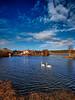 Skeisvatnet, Norway (Vest der ute) Tags: xt2 norway rogaland haugesund water waterscape landscape lake swans swan sky clouds bluesky grass houses outdoor rocks fav25 fav200