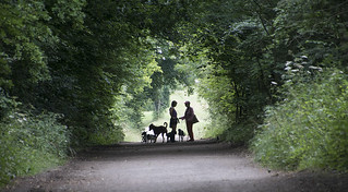 Dog Walkers Stopping for a Chat on Epsom Downs