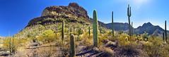 Diablo Canyon (BongoInc) Tags: arizona sonorandesert organpipecactusnationalmonument diablocanyon cactus saguaro organpipe desertsouthwest