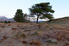 The pines at Kelly Hall Tarn (kenemm99) Tags: 5dmk3 coniston cumbria canon winter places kenmcgrath