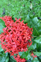 WOL Calauan Laguna Philippines Day 7 (95) (Beadmanhere) Tags: philippines flowers