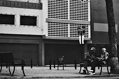 (Aaron Montilla) Tags: aaronmontilla 2018 portrait retrato ef eos 50mm f56 canon iso200 streetphotography fotodecalle fotografiacallejera documentaryphoto fotografiadocumental bwphoto fotografiabancoynegro byn bw twoeldermen dosancianos