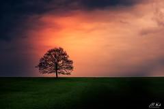 Haute_saône_0417-16-2 (Mich.Ka) Tags: franchecomte arbre campagne cloud coucherdesoleil extérieur hautesaône landscape minimalisme minimaliste nature nuage paysage seul single sunset tree