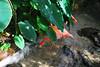 Key West (Florida) Trip 2017 0034Ri 4x6 (edgarandron - Busy!) Tags: florida keys floridakeys keywest butterflyhouse conservatory bird birds flamingo