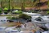 The Inchewan Burn (eric robb niven) Tags: ericrobbniven scotland dunkeld perthshire walking inchewan burn