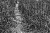 Merced River Trail (punahou77) Tags: yosemite yosemitenationalpark yosemitevalley mercedriver mountains nature nationalpark nikond500 nikon stevejordan sierras sierranevada blackandwhite hike hiking