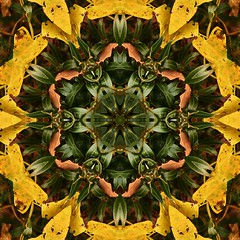 Kaleido Abstract 1725 (Lostash) Tags: art nature edited kaleidoscopes patterns symmetry shapes