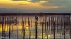 Muy despierta (Francisco Chornet) Tags: garzareal albufera ocaso puestadesol atardecer valencia comunidadvalenciana españa humedales parquesnaturales a7 sonystas sony fe70200f4 paisaje landscape water sunset