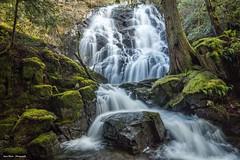 Forest Falls (photobydave@gmail.com) Tags: maryvinefalls waterfall sooke sookepotholeprovincialpark britishcolumbia maryvinetrail maryvinecreek vancouverisland pacificnorthwest moss cascadingwater slowshutterspeed landscape