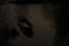 GhostShip II (Jannik (JB)) Tags: ghost ship boot nacht mitternacht licht wasser wald see natur dunkel