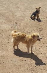 Pampa de la Quinua (Santiago Stucchi Portocarrero) Tags: quinua pampa obelisco ayacucho perú santiagostucchiportocarrero hund perro can cane chien dog hound