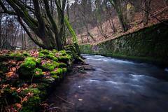 Deep in the forest (Eckehard Straßweg) Tags: fujifilmxt2 nature landscapephotography woodlandphotography natur outdoor landschaftsfotografie forest creek bach water tree baum wasser wald