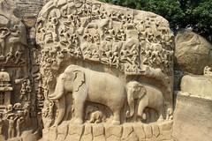 Mamallapuram, Tamil Nadu - Arjuna's Penance (zorro1945) Tags: descentoftheganges mamallapuram mahabalipuram tamilnadu india southindia asia asie stonerelief relief mahabharata cleft shiva elephants sculpture stonecarving arjunaspenance hinduism hindumythology