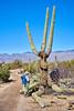 2018-02-23 13.02.10 (Standroid43) Tags: ilce7rm2 sel50m28 snp saguaronationalpark micaviewtrail saguarocactus