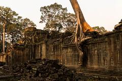 Angkor   |   Preah Khan (JB_1984) Tags: preahkhan temple stone ruins decay tree root tetrameles light shadow khmer siemreap krongsiemreap cambodia cambodge kampuchea nikon d500 nikond500