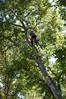 DSC_2212 (markpeterson1) Tags: jdtreepros picturebook redoak treeremoval