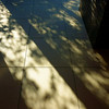 構成=Composition-142/Morning shadows cut by the grid (kouichi_zen) Tags: shadow architecture floor geometry tree nature