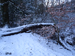 A snow-covered path (stillunusual) Tags: manchester cheadle path trail snow tree nature urbannature winter mcr city england uk 2018