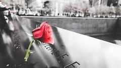 Never forget 9/11 (hannahdawkins) Tags: bravesouls history september holiday red rosesosweet rose bigapple newyork downtown manhattan foreverstrong human remeber 911 america