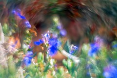 Campo de flores con Helios 44M-4 (lente invertida) (joseange) Tags: helios44 flores softness eccentricities swirlybokeh beyondbokeh helios44m