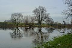 High Water (sigiha1953) Tags: spiegelung reflection wasser water landschaft landscape hochwasser highwater