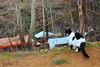 IMG_2127 (burhansakir) Tags: adana feke cat animal nature hayvan kedi siyah beyaz kozan