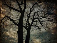 SANS TITRE (pierre.arnoldi) Tags: kamouraska québec canada pierrearnoldi photographequébécois phototexturée phototéléphone phototumblr photoderue photooriginale photocouleur on1photoraw2018 arbremort