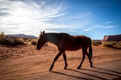 np-440 (SnippyHolloW) Tags: unitedstates us monumentvalley arizona horse