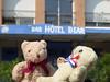 2fri Collioure Cerbere3 Port Vendres2 DT&Dee Hotel Bear (g crawford) Tags: dt dangerted danger ted teddy teds bear bears teddybears softtoys france collioure crawford