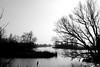 IMG_7853 (piet_nicolaas) Tags: national parc biesbosch blackwhite water trees nature landscape