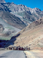 Mountains and goats (1 of 5) (DP the snapper) Tags: petecroftstours kidderminsterctc cycletour ladakh india goats