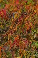 Essen Gruga 14102017 129 (Dirk Buse) Tags: essen nordrheinwestfalen deutschland deu herbst farbe color colours natur nature outdoor nrw de germany mft m43 licht