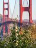Wildflowers by the Bridge (Matt McLean) Tags: bayarea bridge california flower goldengate landscape sanfrancisco