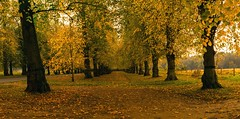 Clumber park in Autumn (peterfrancis51) Tags: clumber clumberpark autumn d5300 nottinghamshire nationaltrust rufford