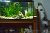 Instintos (GonzalezNovo) Tags: pwmelilla digicamcontrol gata acuario controlremotodecámara
