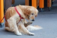 Red in red (akk_rus) Tags: 70300mmf4556gvr nikkor70300mmf4556gifedafsvr nikkor 70300mm nikon d80 nikond80 austria osterreich vienna wien австрия вена europe европа pet pets dog dogs пёс собака nature animals streetdogs