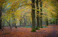 Honour guard, Ten-hut! (Ingeborg Ruyken) Tags: dropbox autumn november rosmalen bomen trees forest bos 500pxs fall natuurfotografie 2017 rosmalensezandverstuiving flickr herfst