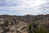 Joshua Tree National Park (Danielle_M_Bedics) Tags: coloradodesert lospalmsoasis joshuatreenationalpark desert ocotillo palms nature hike hiking