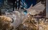 Winged Lion (dansshots) Tags: dansshots nikon nikond750 nyc newyorkcity newyork newyorkatnight highline thehighline rokinon rokinon14mm wideangle lion