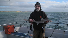 "Andy Sheader's SmoothHound • <a style=""font-size:0.8em;"" href=""http://www.flickr.com/photos/113772263@N05/25978465548/"" target=""_blank"">View on Flickr</a>"